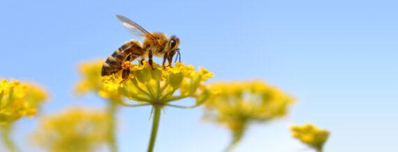 فروش آنلاین عسل طبیعی اردبیل