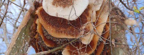 اطلاعیه درج و فروش عسل طبیعی اردبیل